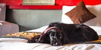 £79 & up -- Dog-Friendly Hotel Deals