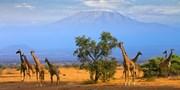 ab 380 € -- Flüge zu den besten Ausgangspunkten für Safaris