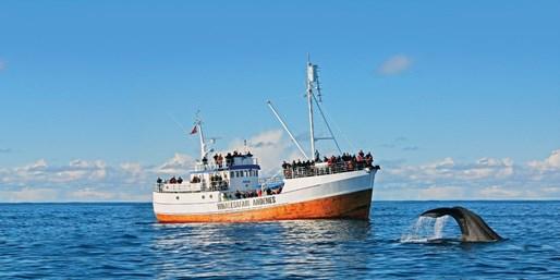 £799pp -- Norway Island Wildlife Tour w/Northern Lights