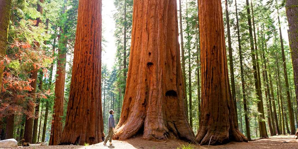 Travelzoo Deal: $105 -- Sequoia National Park Escape w/Breakfast for 2