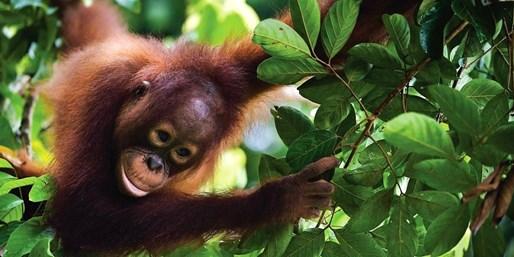 £899pp -- 5-Star Shangri-La Borneo & KL Holiday w/Orangutans