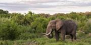 $1999 -- 6-Night South Africa Safari & Sun City Trip w/Air
