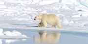 $18,180 起 -- 不一樣的航程 極地 9 晚郵輪假期 靜窺北極熊棲息地