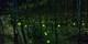 $2,300 起 -- 限時減 星級歎 ANA 來回名古屋機票 一睹夢幻螢火蟲祭