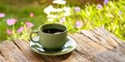 莫负春日好时光,给心情【森】呼吸!这些时髦的咖啡馆不仅有好咖啡,更有好生活!