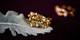 巴塞尔珠宝展唯一华人品牌【限量邀约会员专场】花样珠宝与时髦穿搭鉴赏会