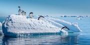 ¥52,999起 -- 圆梦南极破冰价!南极16-18天奇幻之旅 覆盖春节假期不请假 探险企鹅王国
