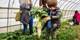 自然是孩子最好的老师!认识嫩芽 / 喂养动物 / 采摘蔬果【会员福利】一日亲子农场之旅
