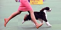 $29 -- 140th Annual Westminster Dog Show at MSG, Reg. $40