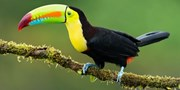 $1439pp -- 15-Nt Costa Rica Nature Tour, Was $1799