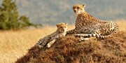 $3712 -- 7-Night Safari Focused Private Tour of South Africa
