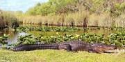 $134-$139 -- Eco-Certified Everglades Safari, Save over 10%