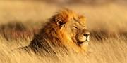 ab 1299 € -- 14 Tage Wüste und Nationalpark in Namibia