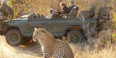 $3999 -- South Africa Upscale Safari; 38 Cities at $2000 Off