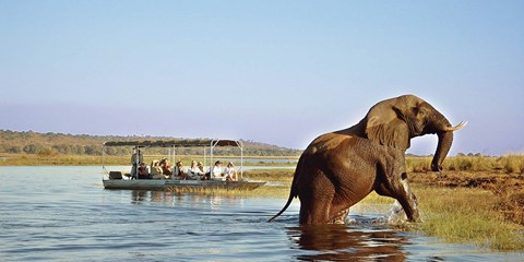$4998 -- South Africa & Botswana Safari w/Air, $2500 Off