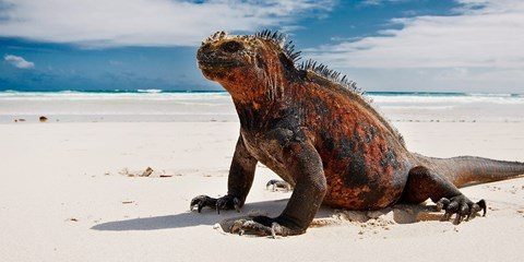 $1,719 -- 4-Day Cruise of 'Extraordinary' Galapagos, 30% Off