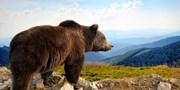 3419 € -- Yukon & Alaska: Zwischen Grizzlys und Goldgräbern