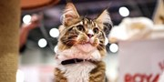£12.73 -- The National Pet Show in London, 30% Off