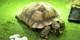 £12.73 -- National Pet Show 2016 in Birmingham, Save 30%