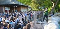 £19.50 -- London Zoo Summer Evening Event Tickets