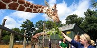£199 -- Zookeeper Experience at ZSL London & Whipsnade Zoos
