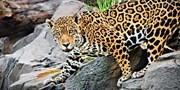 $59 -- Los Angeles Zoo: One-Year Membership