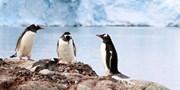 ab 5194 € -- Antarktis-Expedition mit Hurtigruten inkl. Flug