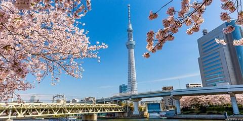 ¥2,880起 -- 樱花季开抢!东京自由行&全程5星品质团 伊豆舞女+有马温泉