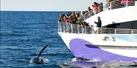Long Beach: Whale-Watching Tours thru April