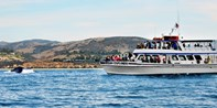 Newport Whale-Watching Cruise for 2 w/Drinks, 70% Off