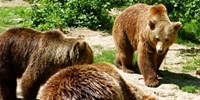 £299pp -- Romania: 4-Nt Dracula & Bears Tour, Save £200