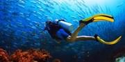$3,400 -- PADI 開放水域潛水員課程 國際認可 深度欣賞水世界