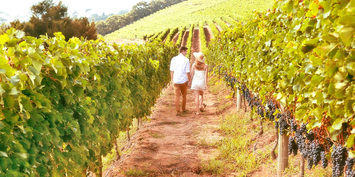 $99 -- Napa Valley Escape incl. Breakfast, Reg. $152