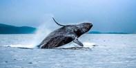 $25 -- Whale Watching Near the Golden Gate Bridge, Reg. $45