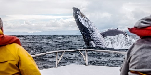$35 -- Monterey: Whale-Watching Trip thru Summer, Reg. $50