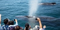 $11 -- Whale Watching Cruise Off Newport Coast, Save 70%
