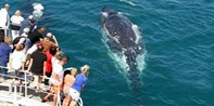 $55 -- Gold Coast: 2.5 Hour Whale Watching Cruise, Save 44%