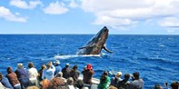 $30 -- 3-Hour Channel Islands Whale-Watching Cruise, 40% Off