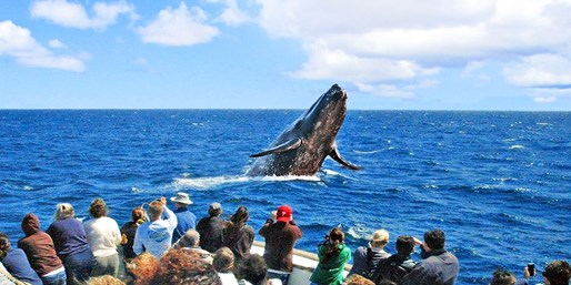 $30 -- Channel Islands Whale-Watching Cruise, Reg. $50