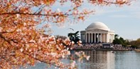 Cruise the Potomac During Cherry Blossom Season