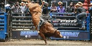 $15 -- Saturday: Pro Bull Riders in London, Reg. $25