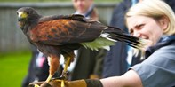 £69 -- Half-Day Falconry Experience for 2, 45% Off