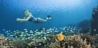 $39 -- Reef Snorkeling Lessons in South Florida, Reg. $95