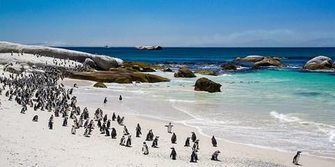 """¥7,299 -- 立减¥700!暑期南非8日 搭乘国泰及港龙航空 舒适玩转""""彩虹之国"""""""