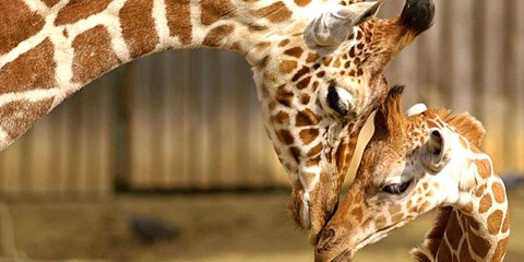 $9 & up -- Oakland Zoo: Admission to See 660+ Animals