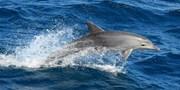 $29 -- Sunshine Coast Dolphin & Marine Discovery Cruise