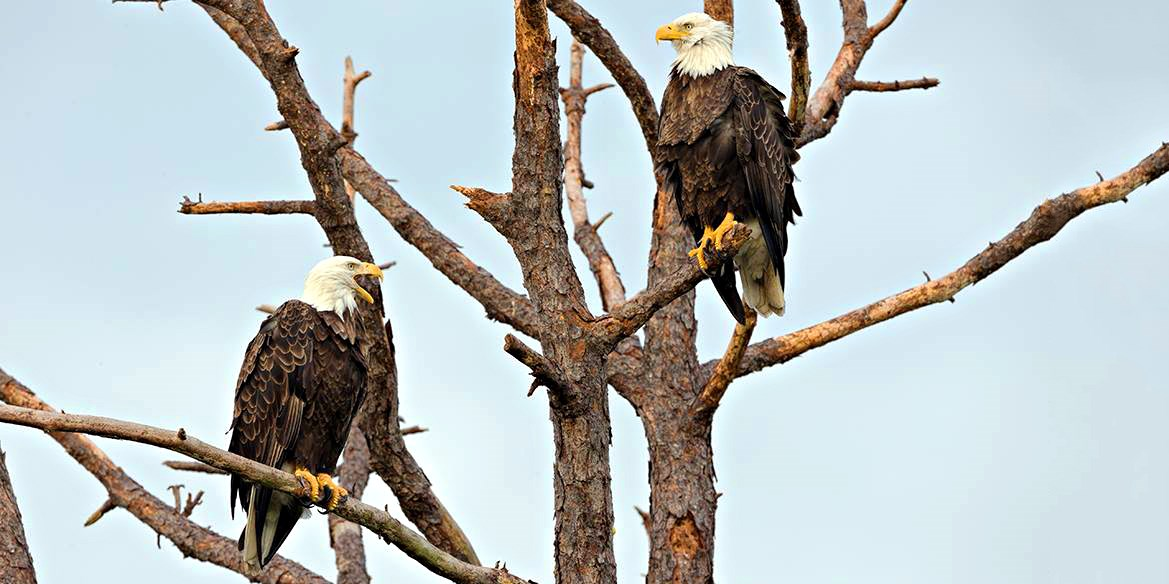 $39 -- Pre-Sale: Skagit River Bald Eagle Float Trip