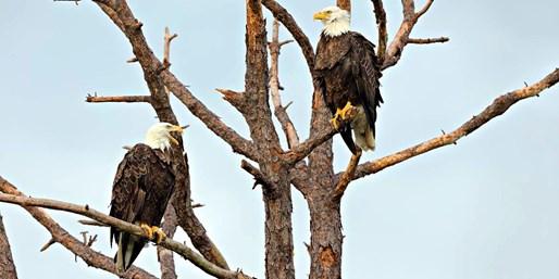 $39 -- Skagit River Bald Eagle Float Trip in Peak Season