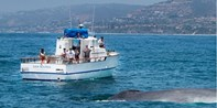 $14 -- Half Off Whale-Watching Tour in Dana Point