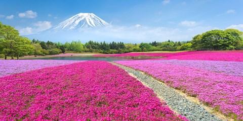 $2,772 -- 賞春趣,東京出發富士山賞粉紅芝櫻花海、採草莓吃到飽